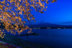 ライトアップ富士山の桜2