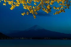 ライトアップ富士山の桜1