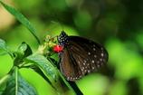 昆虫館の蝶