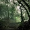 霧の白山多賀神社