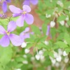 片隅で咲く