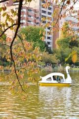 秋のスワンボート