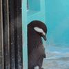 落ち込むペンギン