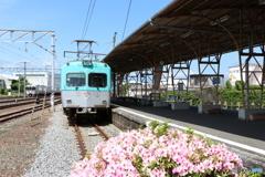 岳南電車と花
