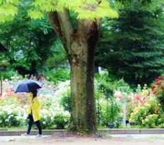 rose garden ♪