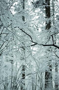 金剛山 樹氷