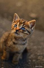 種子島の自然で生きる猫