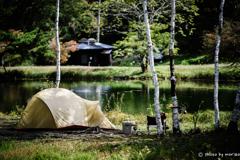 静かな湖畔の・・・MOSS