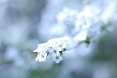 桜も綺麗だけど