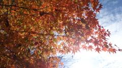 滋賀の紅葉