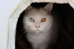 我が家の猫4