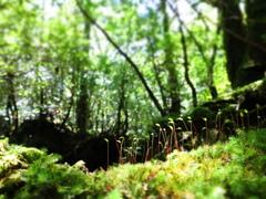 森の中のキラキラ