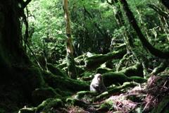 木漏れ日の中のヤクザル