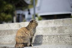 猫の背中と寺