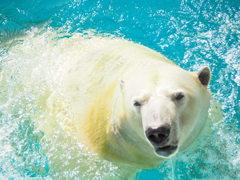 日本平動物園スター