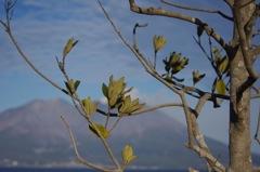 鹿児島の冬