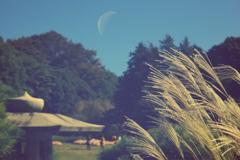 お月見的風景