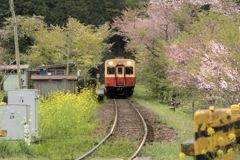 春の旅立ち