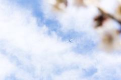 見上げれば、梅 青空 そして 飛行機
