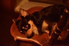 夜10時の愛犬