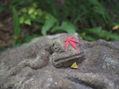 紅葉帽子をかぶる子カエル