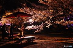 茶処と夜桜