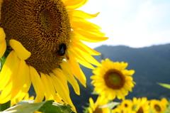 日焼けサロン Sun Flower