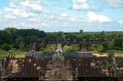 カンボジアのジャングル