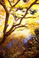 2006年12月、旧古河庭園で