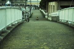 船橋探訪 05