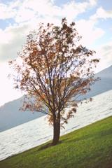 斜めってる木