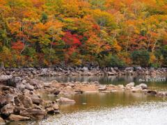 紅葉広がる琵琶池