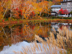 蓮池の紅葉とススキ