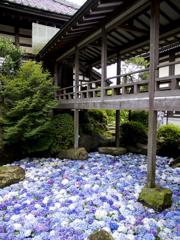 紫陽花の池