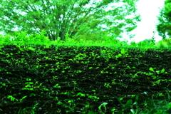 緑がいっぱい!