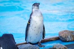 ペンギンくんウォーズ