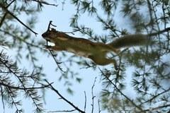 ただ今巣作りの枝運び中!