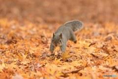 葉っぱの絨毯で
