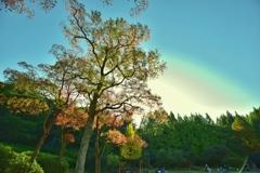 彩りのある木