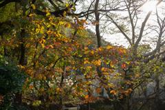 土肥金山 落葉