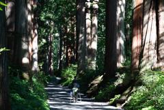 巨木と人間