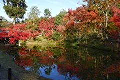 今年最後の見頃であろう紅葉in高台寺5