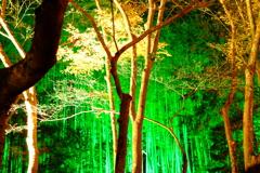 冷え込む夜と照らされる竹林