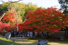 今年最後の見頃であろう紅葉in高台寺4