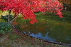 今年最後の見頃であろう紅葉in高台寺8