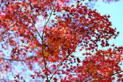 今年最後の見頃であろう紅葉in高台寺2