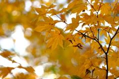 今年最後の見頃であろう紅葉in高台寺6