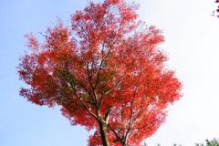 今年最後の見頃であろう紅葉in高台寺7