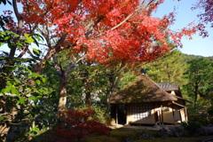 今年最後の見頃であろう紅葉in高台寺3