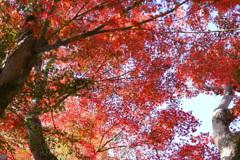 今年最後の見頃であろう紅葉in高台寺1